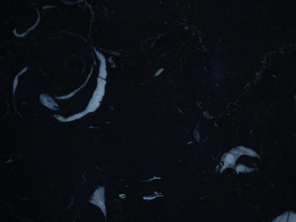 black_fossil